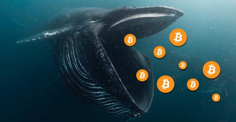 Количество биткоин китов достигло 2 летнего максимума