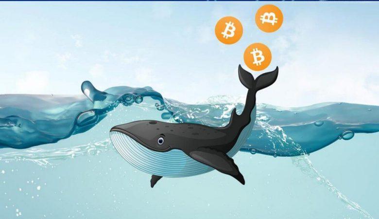 Биткоин-киты не собираются продавать по текущим ценам